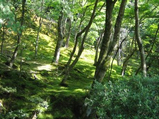 Forest near Kyoto