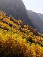 nemrut_trees