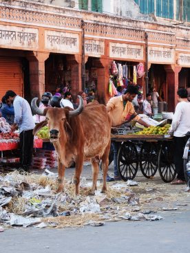 ghat_darwaza_bazar_road_animal_life